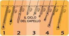 Il ciclo del capello